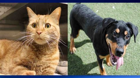 city cuts adoption fees  dogs  cats  adopt