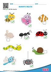 printable birds  insects worksheets  pre