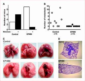The Ephb6 Receptor Tyrosine Kinase Is A Metastasis Suppressor That Is Frequently Silenced By