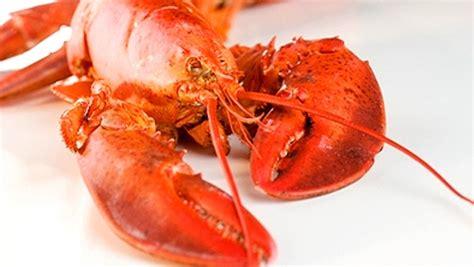 cuisiner le homard homard valeur nutritive bienfaits santé et conservation