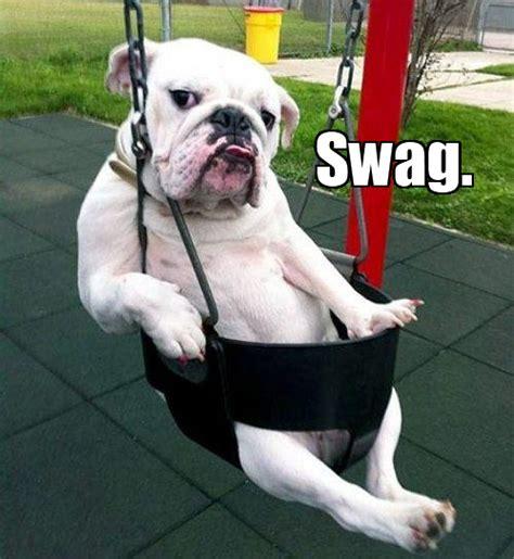 swag dog swag   meme