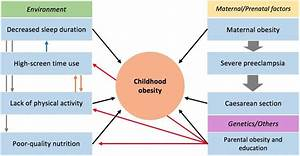 Childhood Obesity In Mexico  Social Determinants Of Health