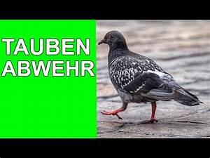 Tauben Vertreiben Geruch : tauben langfristig vertreiben 2017 youtube ~ Eleganceandgraceweddings.com Haus und Dekorationen