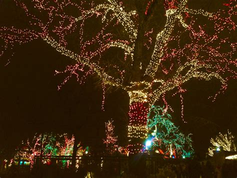 lincoln park zoo holiday lights are still on oinkety