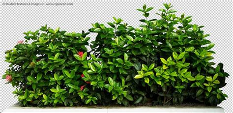 wood fence post png ixora coccinea garden plants texture 00004
