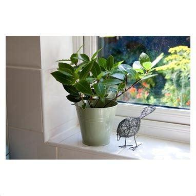 images  laurus nobilis decorations indoor