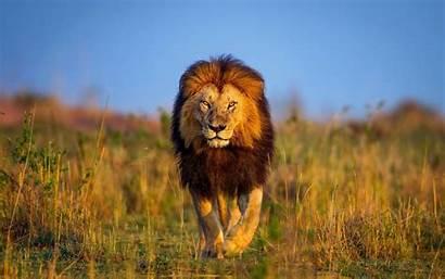 Lion Rasta Site