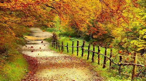 Beautiful Fall Backgrounds Hd by Beautiful Autumn Scenery Wallpapers Hd Wallpaper