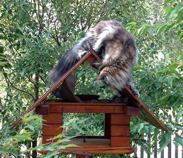 Fangen Im Haus by Maus Im Haus Fangen Gartenhaus Gebraucht