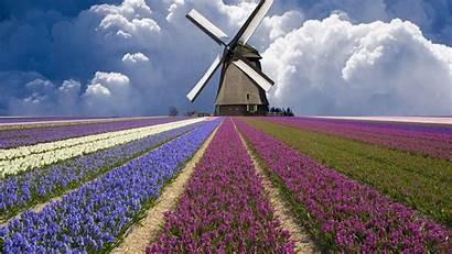 Field Flower Wallpapers Flowers Purple Cave