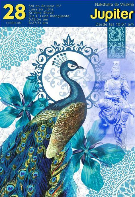 images  animals peacocks  penhens