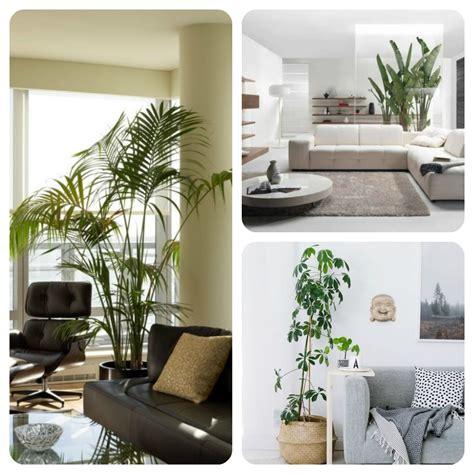 plante pour chambre à coucher comment décorer intérieur avec des plantes trucs de