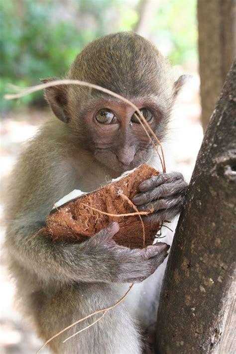 makaken affenkind  forum fuer naturfotografen