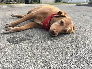 Florida dog lies down in the road for hours after his ...