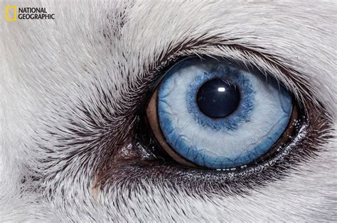 extraordinary close    animal eyes