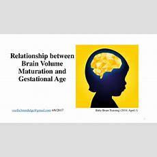 Relationship Between Brain Volume Maturation And Gestational Age