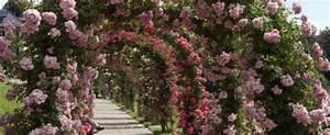 Rosen Für Rosenbogen : herzlicher willkommensgru mit rosenbogen oder rankgitter gartenxxl ratgeber ~ Orissabook.com Haus und Dekorationen