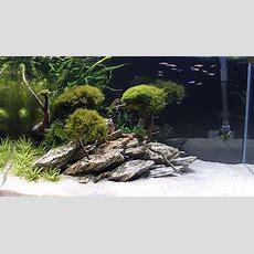 5 Kg Natural Wood Stone For An Aquarium Aquascaping