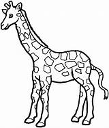 Giraffe Coloring Pages Animals Wildlife Spotted sketch template