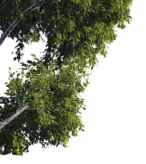 arbres feuilles