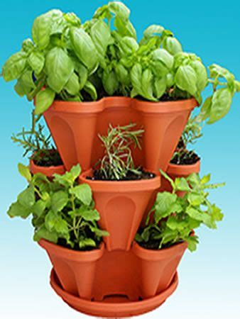 indoor culinary herb garden kit back to basics