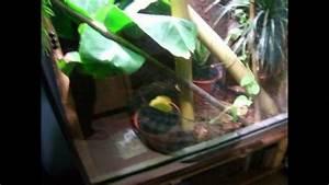 Giant Day Gecko terrarium set up ! - YouTube