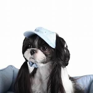 Video Pour Chien : casquette pour chien originale casquettes chiens oh pacha ~ Medecine-chirurgie-esthetiques.com Avis de Voitures