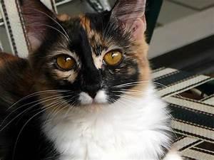 Kayla's Amber Eyes | Cynthia | Flickr