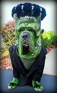 20 cool pet costumes for hative