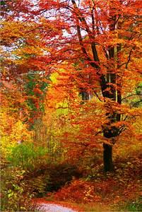 Schöne Herbstbilder Kostenlos : herbst bilder ab 6 90 online bestellen gratisversand ~ A.2002-acura-tl-radio.info Haus und Dekorationen