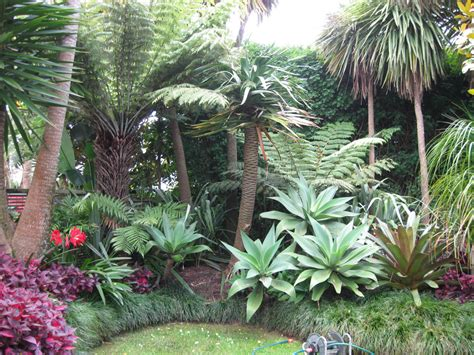 tropical style gardens sub tropical garden landscape design garden care services and gardening maintenance with