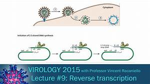 Virology 2015 Lecture  9  Reverse Transcription And