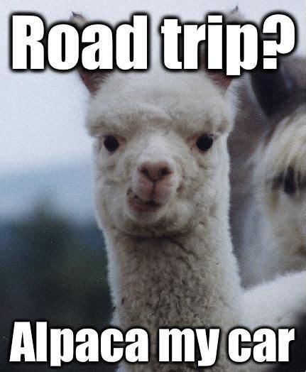 Alpaca Meme - alpaca my car red mccomb s universal toyota pinterest