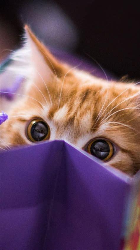 Aesthetic Cat Wallpaper Iphone purple cat aesthetic wallpapers top free purple cat