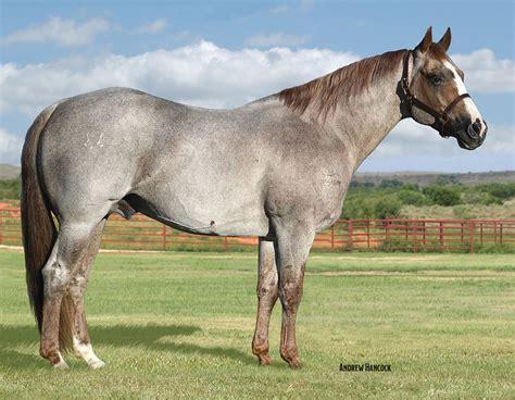 horses quarter horse ranch king boon san peptoboonsmal american peppy badger sires cutting foundation sorrel breed cat pep hickory