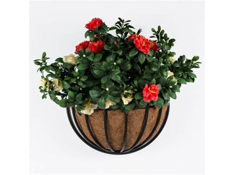 knoxville   wall planter  coconut liner