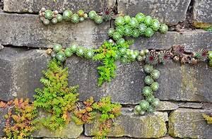 Betonsteine Gartenmauer Preise : kosten f r eine gartenmauer kostenfaktoren preisbeispiel ~ Frokenaadalensverden.com Haus und Dekorationen