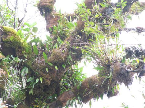 pflanzen ohne wurzeln pflanzen ohne wurzeln wurzellose luftpflanzen in