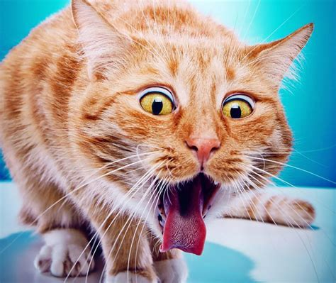 12 Things That Make Cats Go Crazy
