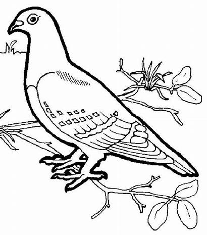Coloring Pages Types Different Birds Animal