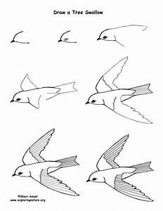 Best 25 How To Draw Birds Ideas On Pinterest How To