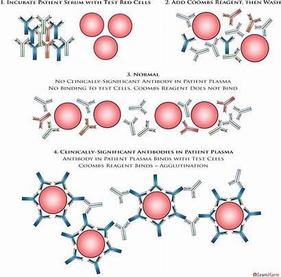 Coombs Test Indirect Antibody Screening