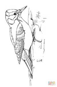 De Specht Kleurplaat by Woodpecker Coloring Page Free Printable Coloring Pages