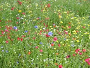 Graines Fleurs Des Champs : parterre de fleurs des champs au jardin forum de jardinage ~ Melissatoandfro.com Idées de Décoration