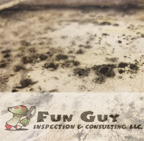 indoor mold detection  closer  funguyinspecions