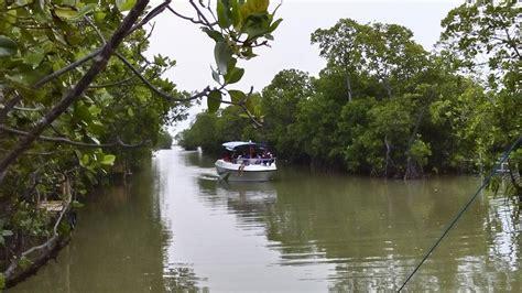 hutan mangrove pandansari brebes jawa tengah pesona