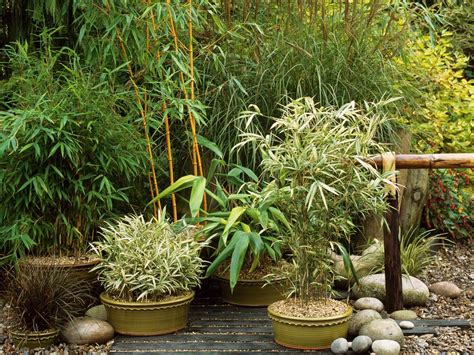 asian garden plants asian inspired container garden hgtv