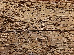 what to do if you find woodworm ourpropertycouk With vers de bois parquet