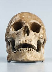 Free Images   Color  Clothing  Skull  Bone  Face  Head