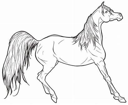 Coloring Horse Realistic Pages Printable Popular